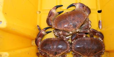 crab-lobster-scallops.jpg