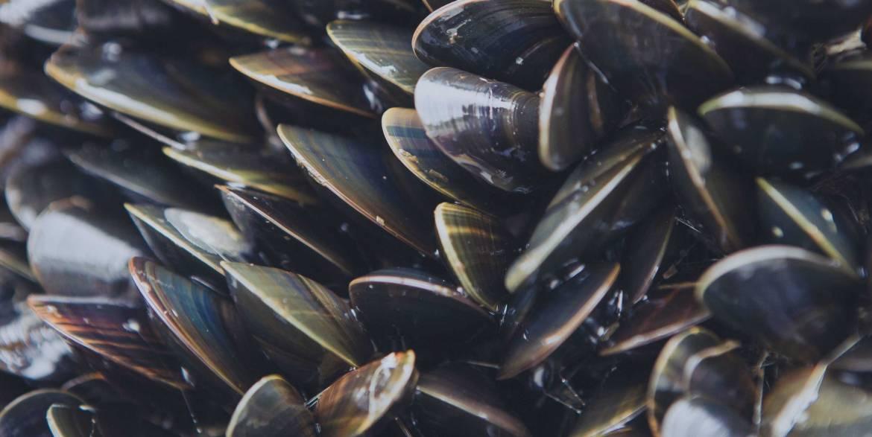 Mussels-Header.jpg